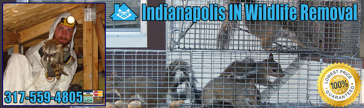 Indianapolis Wildlife and Animal Removal